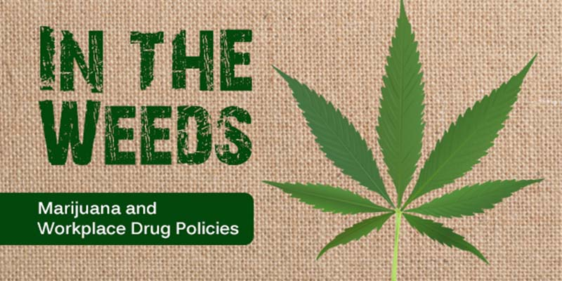In the Weeds: Navigating Marijuana Legalization and Workplace Drug Testing Policies